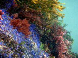 atlantic ocean sea plants
