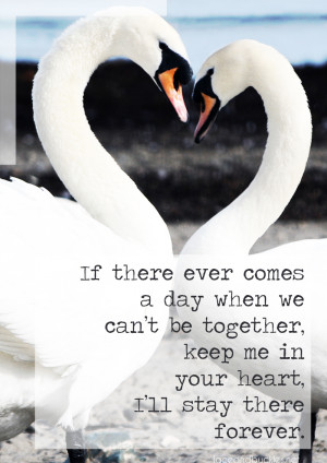 Togetherness Swans - Love Quotes - Visual Statement Lace and Buckles