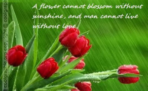 flowers have no any blossom without sunshine man can not live ...