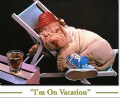Vacation+funny+quotes+quote+vacation+dog+puppy+lol+funny+quotes+funny ...
