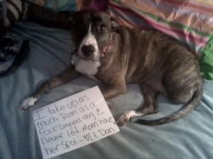 Best dog name ever... Lt.Dan!