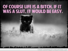 ... quote but i fell in love with that kitty. (I'm sorry i'm cheating on