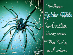 When spider webs unite, they can tie up a lion