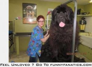 Clifford the big black dog