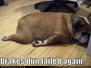 Funny-dog-pictures-brakes-fail-bulldog_medium