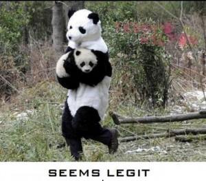 Funny Pandas (09 Pics)