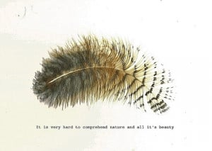 quotes-nature-sayings-feather-short-cute-witty_large.jpg