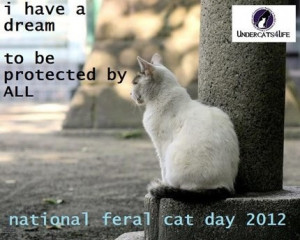National Feral Cat Day - October 16 ... It's Actually National Boss ...
