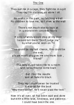 pitbulls poems