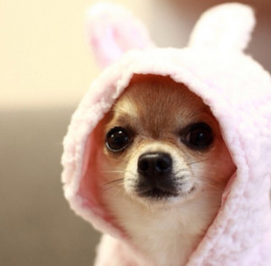 Cute Puppy With Hood
