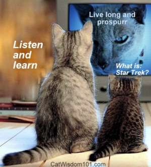Wins Best Cat Video and other media mews by Layla Morgan Wilde. Cats ...
