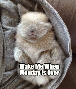 Monday Bunny Meme*day (Over it)