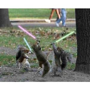 Funny Squirrel (94)