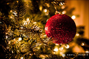 20 beautiful christmas trees christmas tree photography