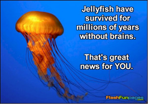 FUNNY JELLYFISH QUOTES image gallery