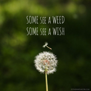 Some see a weed some see a wish quote | Dandelion images | Pictures of ...