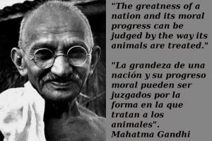 Animal Rights Quotes Gandhi On animal rights and human