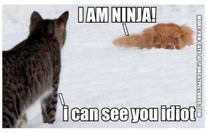 funny-cat-picture-i-am-ninja-i-can-see-you-idiot