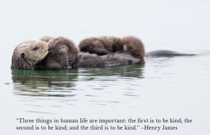 sea otter with babies