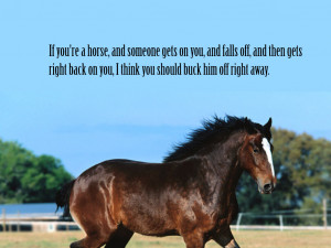 Animals Quotes Wallpaper 1024x768 Animals, Quotes, Horses