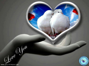 Dove Love Red Roses