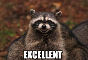 funny raccoon picture funny raccoon picture