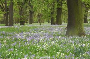 ;flower;flowers;fresh;grow;growth;N.Z.;New-Zealand;NZ;Oak-Trees ...