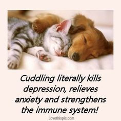 quotes cute quote pets picture quotes cuddling ...If you love German ...