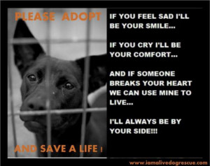 Sad Shelter Dog Poem Rescue dog poem