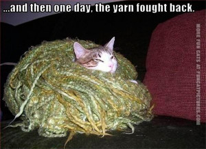funny-cat-pics-the-yarn-fought-back