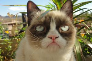 grumpy cat tard the daily grump tardar sauce tard the grumpy cat ...