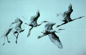 Birds_in_flight-717x464.jpg