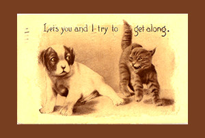 Cat Quotes, Memorable Words About Incomparable Creatures