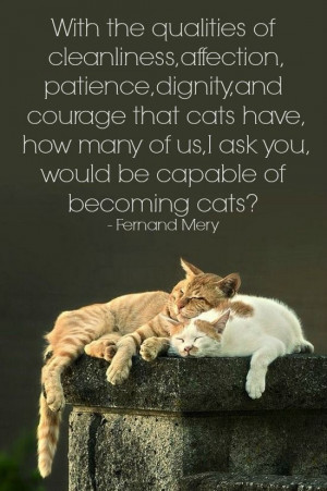 cat #quotes #cats =^..^= www.zazzle.com/kittyprettygifts