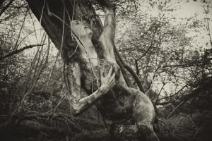 Wild Women of the Woods'