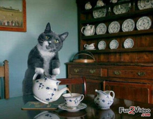 Tea Party Of Funny Cat