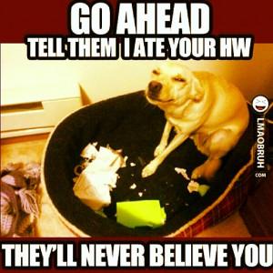 mathjoke haha joke humor meme math mathmeme dog homework