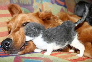 Photos droles ou tendres de chats et chiens