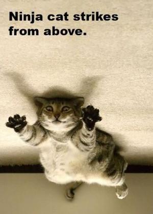 Cat Quotes (50)