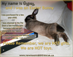 ... and Daisy contributed to the founding of New Moon Rabbit Rescue