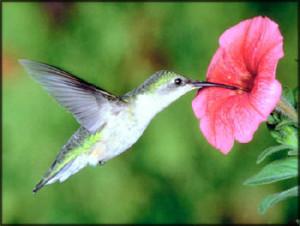 inspirational-stories-hummingbird-nectar-flower.jpg