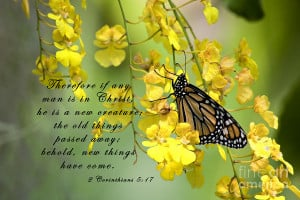 Monarch Butterfly With Scripture Photograph
