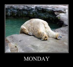 Funny Picture - I don't like Monday Polar Bear
