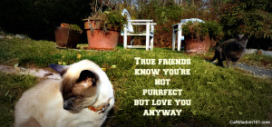 cat quotes on friendship