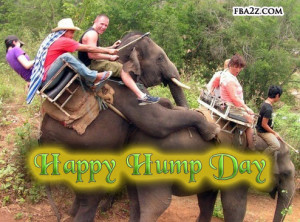 hump day funny quotes source http imgarcade com 1 funny hump day ...