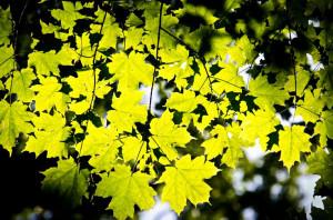 Fall Quotes: 14 Inspirational Autumn Sayings