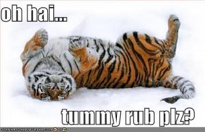 funny-pictures-tiger-snow-tummyrub.jpg