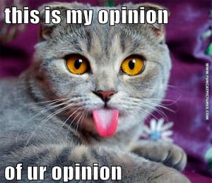 Your opinions doesn't matter to this cat