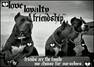 Pit Bulls are my Family