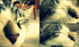 Shadaze Sleep Well Love Derm